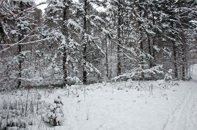 Se esperan hasta 20 cm de nieve en algunas partes de Ontario