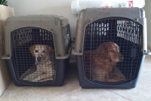 010202308129d0b254920d25dbde4a0d71ad24fdef Bringing pets to Panama - from A to Z Moving to Panama Pets