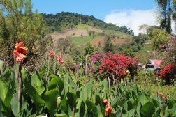 img_6769-scaled Day Trippin' - Cerro Punta Panama The Expat Life