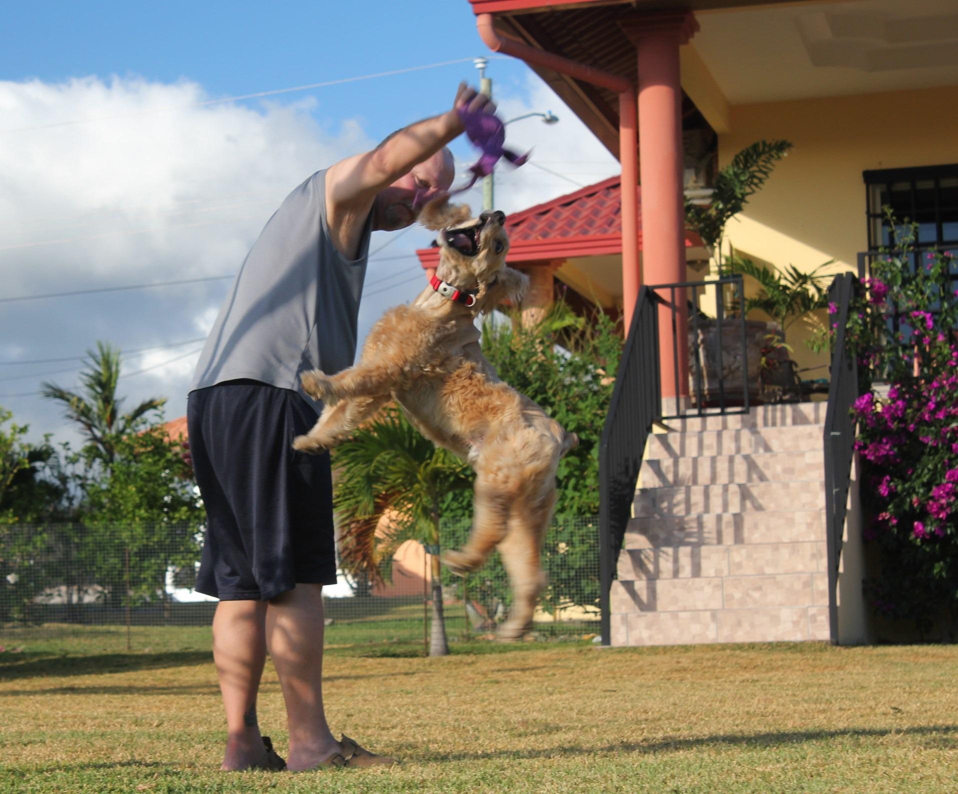 img_6874 Four to Tango Pets The Expat Life