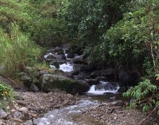 img_1506-scaled Another Day, Another Adventure Hiking in Panama The Expat Life The Great Outdoors