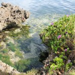 img_7273 Return to the San Blas Islands Panama San Blas Islands