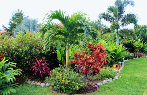 Flowerbed3 In Boquete, our Garden of Eden . . . Panama The Expat Life The Great Outdoors