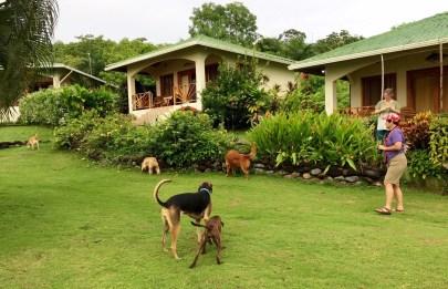 Hooked-on-Panama-Grounds-3-1 Doggy Bliss at Hooked on Panama Panama Pets