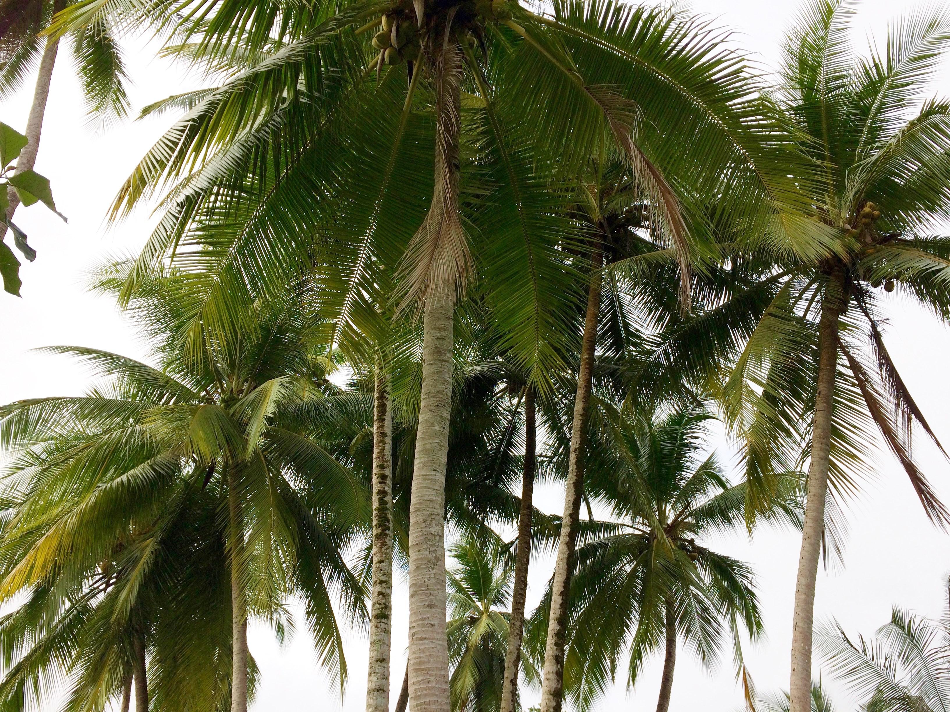 Hooked-on-Panama-Palms Doggy Bliss at Hooked on Panama Panama Pets