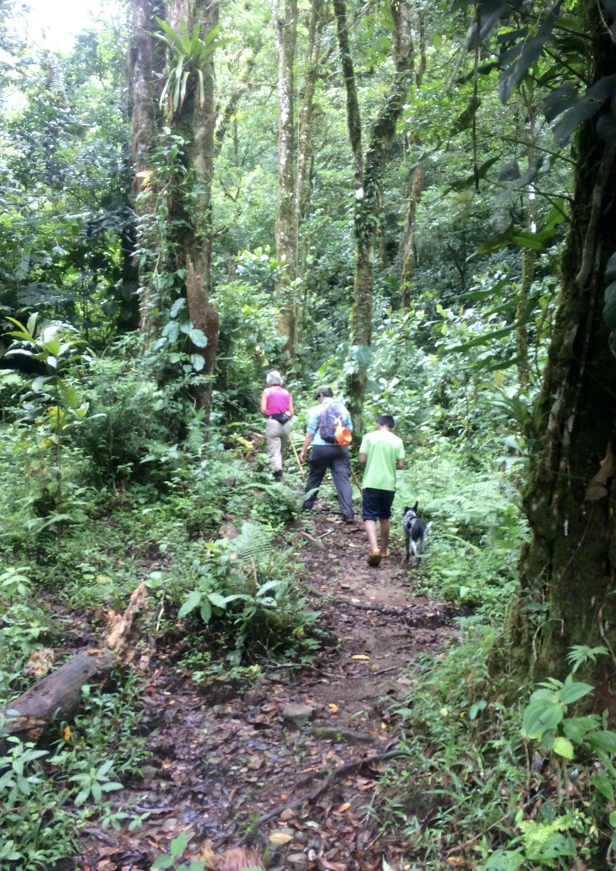 IMG_8194 Boquete's Sendero El Pianista (The Pianist Trail) Hiking in Panama Pets The Great Outdoors