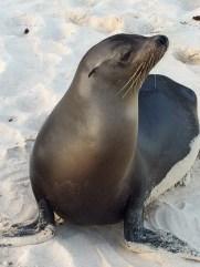 Friendly-Galapagos-Sea-Lion A Galapagos Voyage and a Dream Come True Ecuador Galapagos Islands