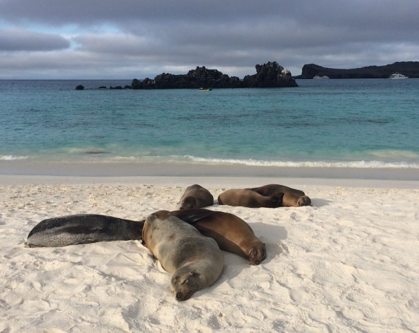 Sea-Lions-Chilling-on-the-Beach The Galapagos Islands - Pinniped Paradise! Ecuador Galapagos Islands Panama