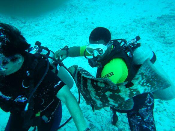 DSCN0176.JPG_1 A Fishy Tale: Diving in the Bahamas Bahamas Diving