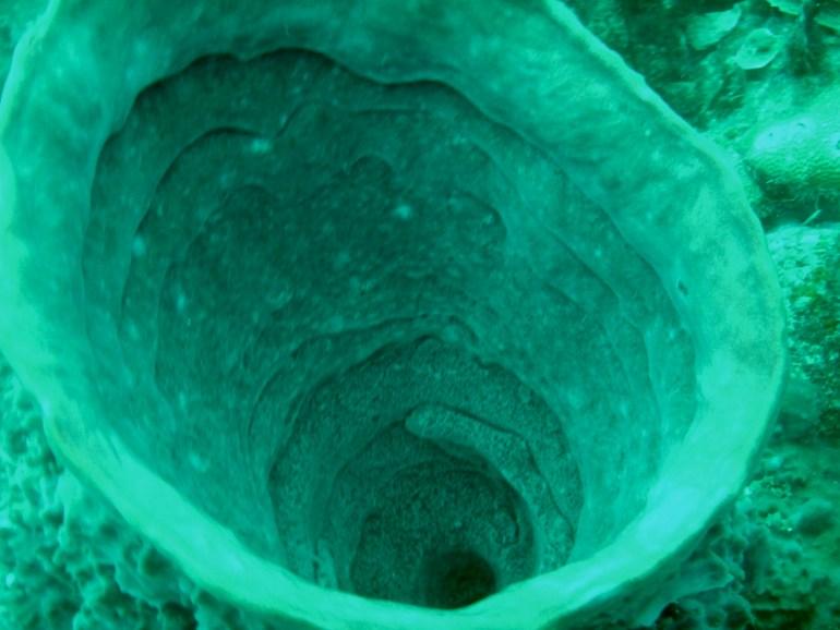 fullsizeoutput_10e1 Diving in Cartagena, Colombia Cartagena Colombia Diving