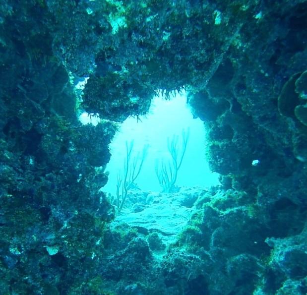 fullsizeoutput_6da A Fishy Tale: Diving in the Bahamas Bahamas Diving