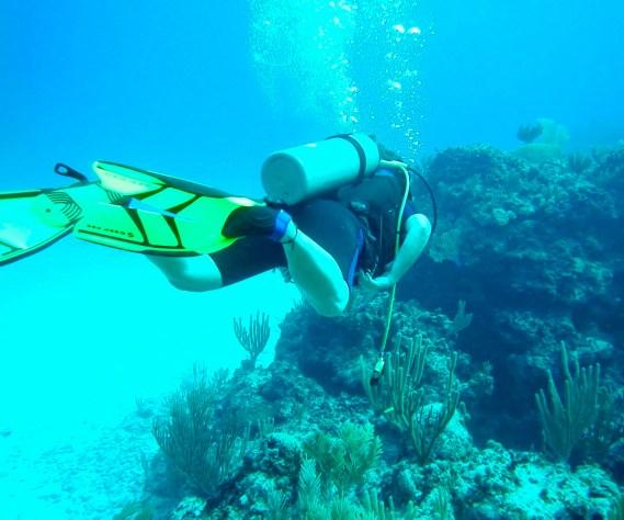 fullsizeoutput_6ec A Fishy Tale: Diving in the Bahamas Bahamas Diving