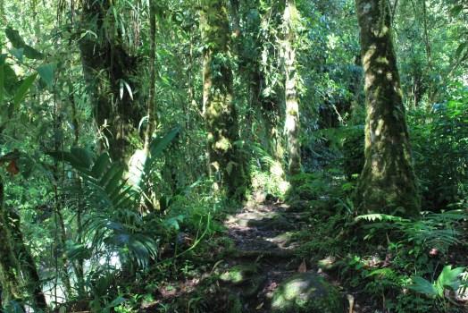 IMG_9889-1024x683 Panama's Sendero Los Quetzales Hiking in Panama Panama The Great Outdoors
