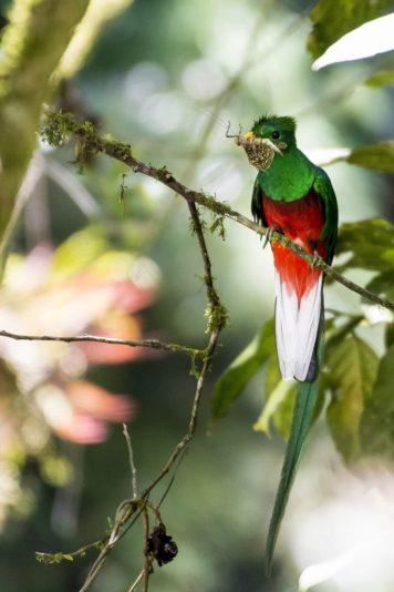 Image-683x1024 Panama's Sendero Los Quetzales Hiking in Panama Panama The Great Outdoors