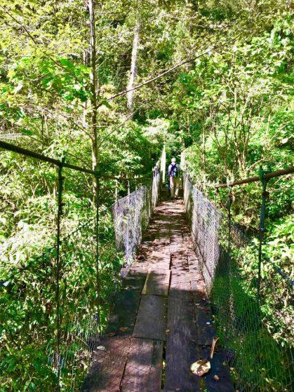 fullsizeoutput_f5d-768x1024 Panama's Sendero Los Quetzales Hiking in Panama Panama The Great Outdoors