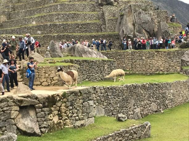 k6Byt9PASFiOyhbeihiA-1024x768 The Machu Picchu Experience Machu PIcchu Peru South America