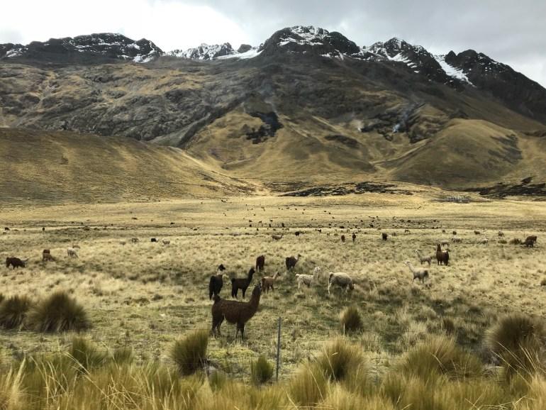 aKGAQ62aQTaH55BalYlng-1024x768 PeruRail Titicaca Train from Cusco to Puno Peru