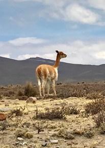 fullsizeoutput_1801-213x300 Peru Explorations: Arequipa Arequipa Peru