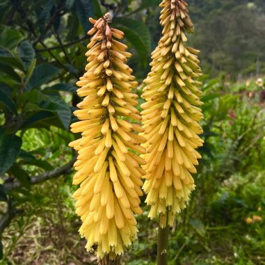 65EBEFEF-3A33-410B-A0BA-793495535116-scaled A Visit to a Colombian Flower Finca Colombia Medellin