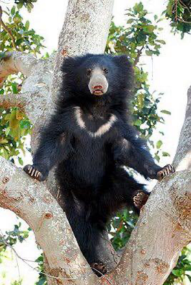sloth-bear Guest Post: The Elephants of India's Wildlife SOS India