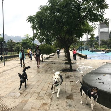 IMG_3862-scaled Walking in Medellín: Our Salvation in a Quarantine Colombia