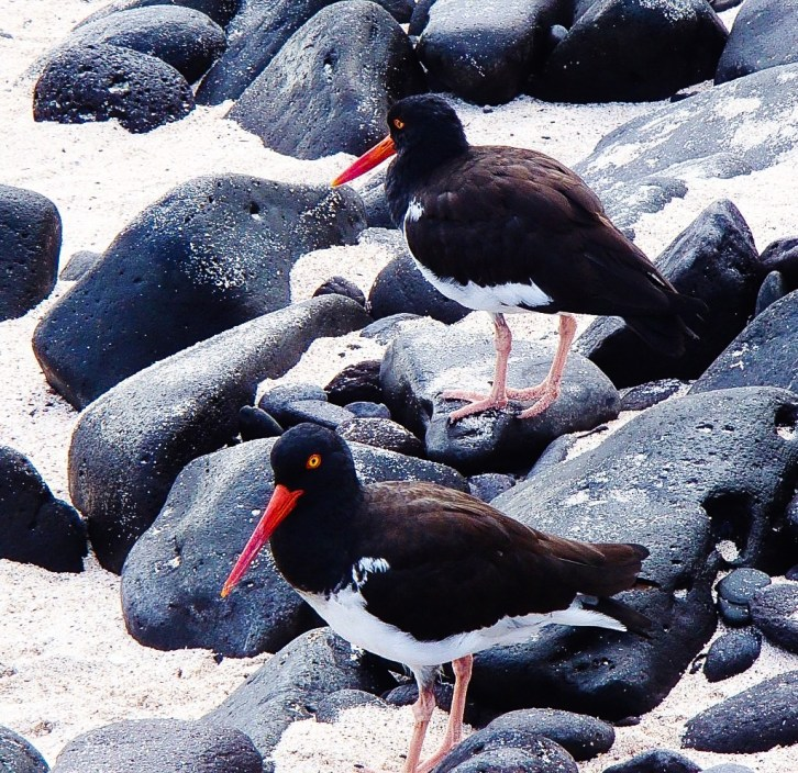 birds Our Best of the Galapagos Islands Galapagos Islands