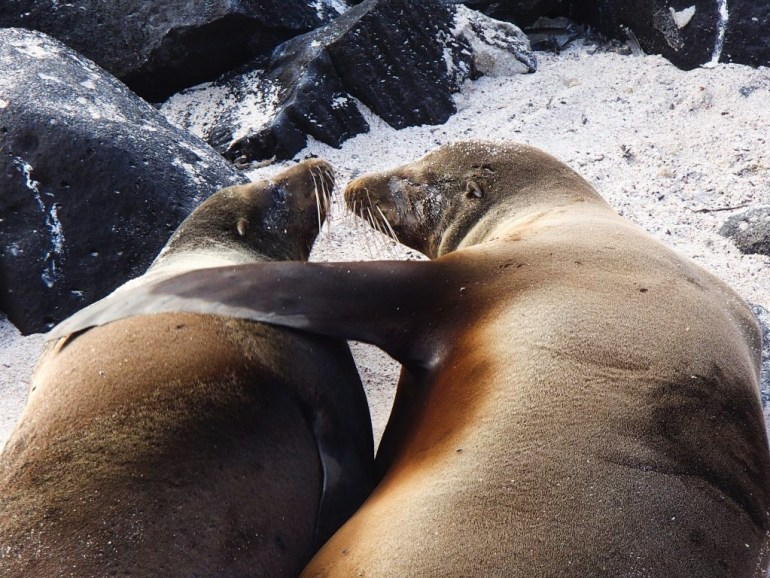 sea-lions-2 Our Best of the Galapagos Islands Galapagos Islands