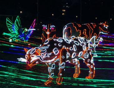 32E38D48-6CC0-408D-B881-AF73993813FF-scaled ¡Feliz Navidad! Medellín Lights Up for Christmas Colombia Medellin