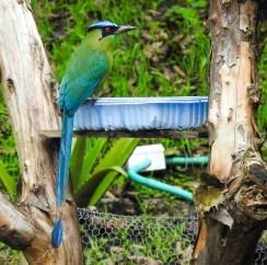 DSCN2445 Backyard Birds! Colombia The Great Outdoors