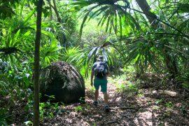 Jungle trail in Casa Tayrona on Colombia's Caribbean coast