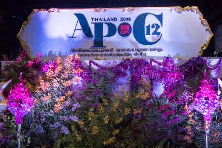 orchid show-5