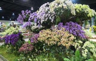 orchid show-8