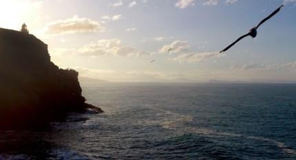 Taiaroa Head, Royal Albatros Center.