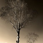 NZ 2013 – Día 15: Abel Tasman Park – Picton