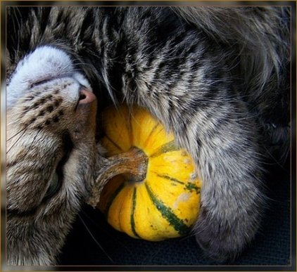 chat et courge