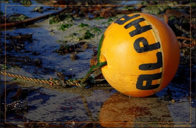 bouée orange