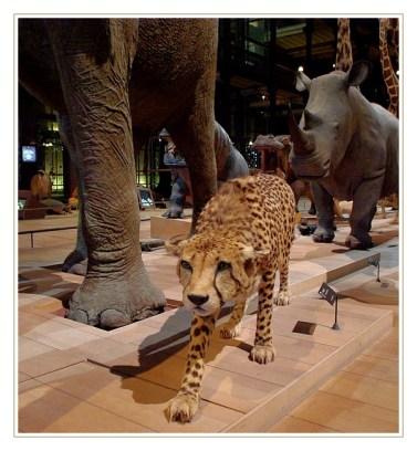 galerie de l'évolution muséum d'histoire naturelle