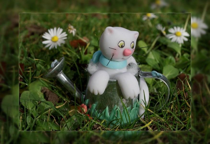 chat arrosoir
