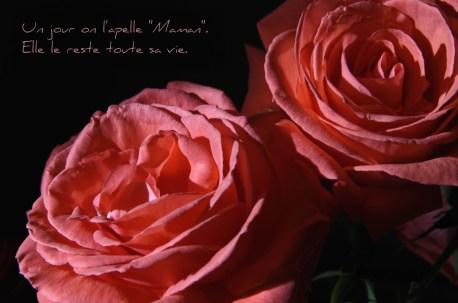 roses du jardin pour la fête des mères