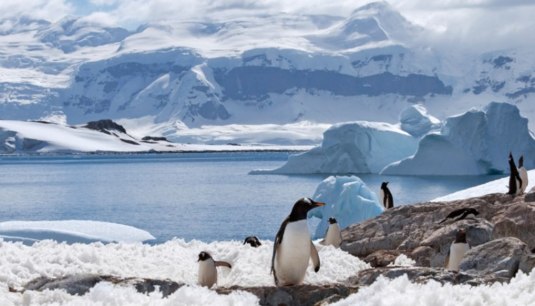 Take a Luxury Polar Expedition Cruise with A&K