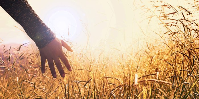 Hands in the grass during sunset