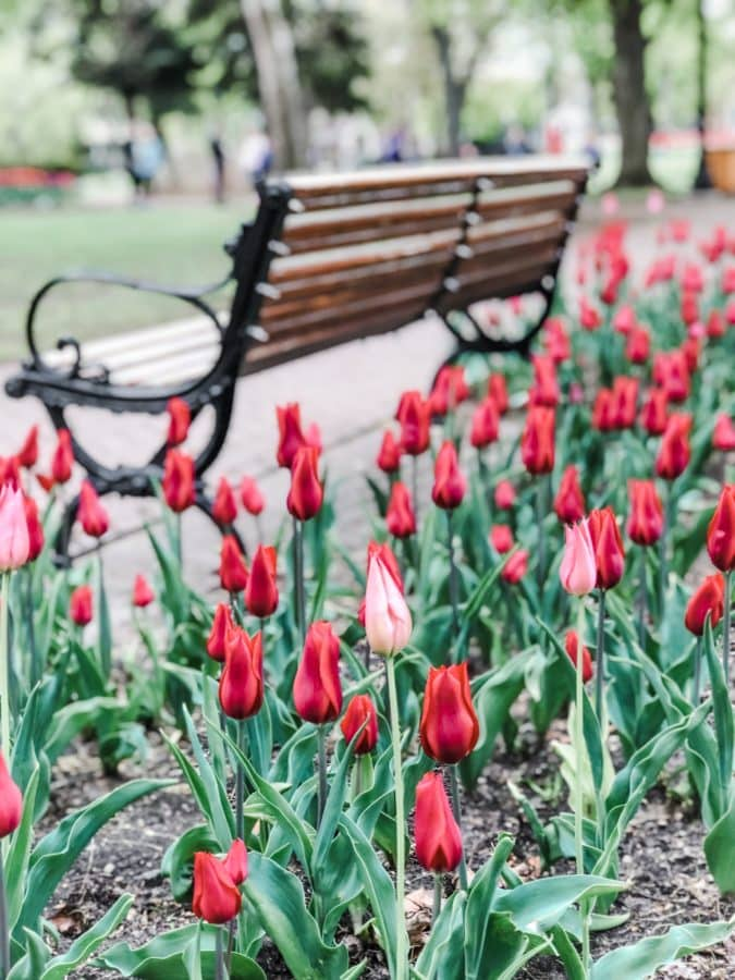 Have you ever wanted to visit Holland in springtime? Well, look no further than Holland, Michigan for tulip lanes, Dutch villages, and wooden shoes galore. Here are 35+ Photos To Inspire You To Visit Holland, Michigan during their Tulip Time Festival in May.