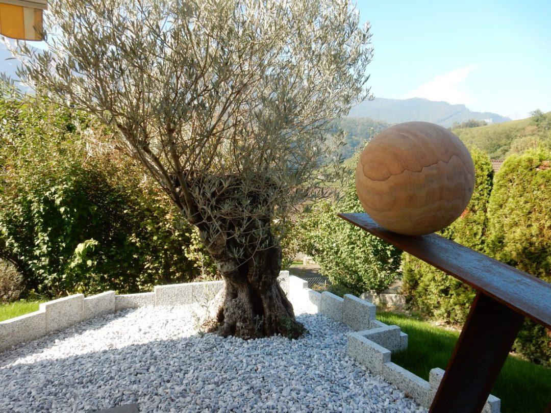 Plantation d'olivier avec sculpture originale