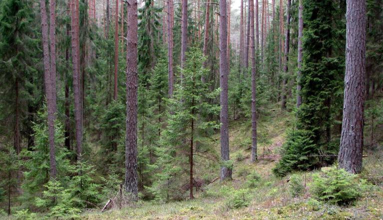 Smuks mežs