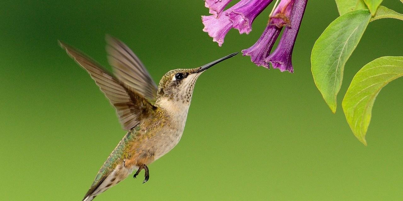 La favola del colibrì