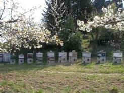 Apiculture à Laudun