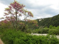 Vallée de l'Ibie
