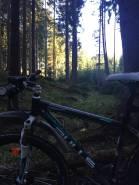 MTB Wald