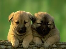 Top 15 Cutest Dog Pictures In The World! These Dogs Are So Cute You'd Want To Eat Them! Not ...