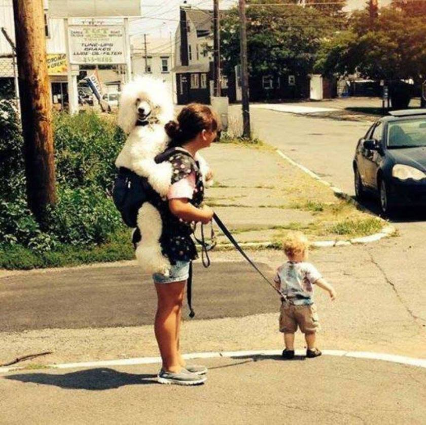 Walking You Baby With Your Dog